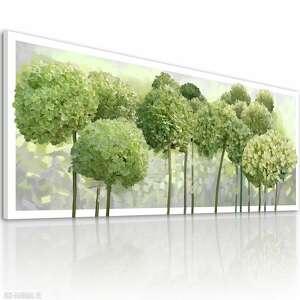 obraz drukowany na płótnie kwiaty hortensji ogrodowej w odcieniach zieleni
