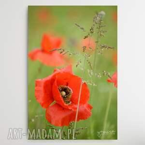 maki ii - foto-obraz 30x40cm, maki, kwiaty, czerwone natura, kwiat, obraz