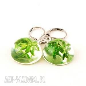 kolczyki z zielonymi gałązkami w żywicy
