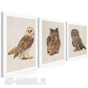 obraz na płótnie - sowy tryptyk 3x50x70 cm 03301, tryptyk, sowy, ptaki