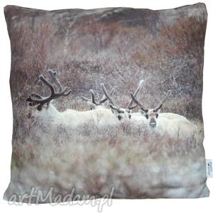 święta upominek Poduszka dekoracyjna Reindeer III, dekoracyjna, zimowa, skandynawska