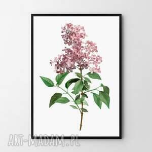 plakat obraz bez a3 - 29 7x42 0cm, bez, kwiaty, do salonu, wiosna