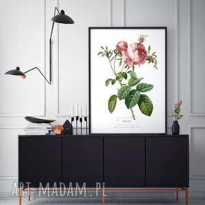 Plakat b2 kwiaty plakaty fajnymotyw wystrój, wnętrze, prezent