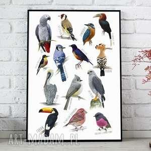 oryginalny prezent, plakat a3 - ptaki, plakat, plakaty, obraz, dom, ozdoba, ptaki