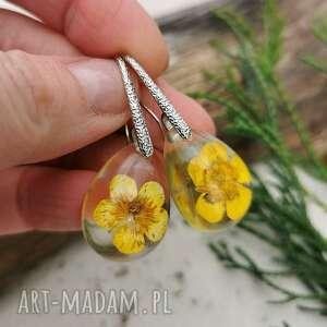 krople z suszonymi jaskrami k54, kolczyki kwiatami, biżuteria jaskarami