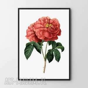 plakat obraz czerwona róża 30x40 cm, obraz, plakaty, dom, ozdoba