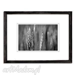na święta prezent Życie, fotografia autorska, fotografia, pola, zboże, kłos