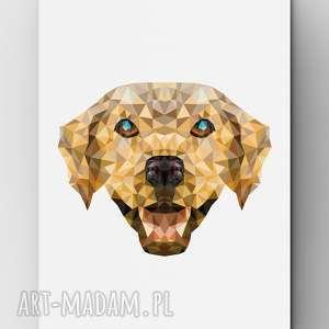 pies, plakat, grafika, dom, labrador, wnętrze