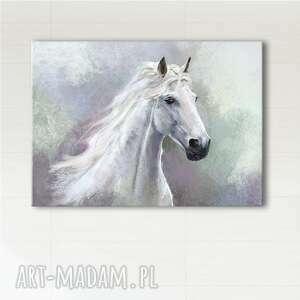 liliarts obraz - biały koń wydruk na płótnie, obraz, koń, konik, płótno