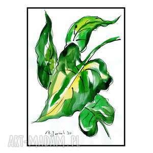 liść kalii, liście, grafika, rysunek, obraz, akwarela, ręcznie