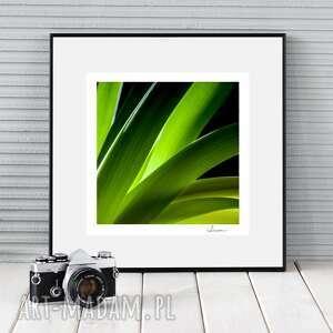 hand-made fotografie autorska fotografia, kwiaty studium iv