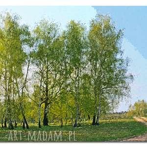 obraz brzozy 1 - 120x70cm na płótnie las drzewa, obraz, płótnie, brzozy