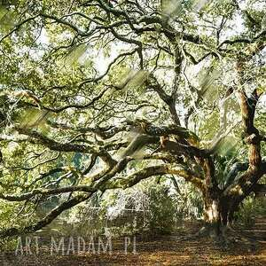 obraz drzewo 35 - 90x60cm na płótnie do salonu, obraz