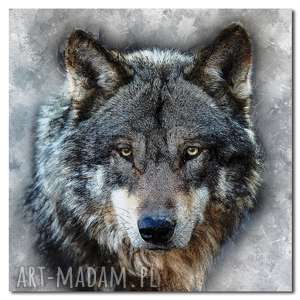 obraz duży wilk 3 - 100x100cm na płótnie zwierzęta