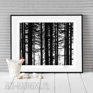 autorska fotografia analogowa, las i, dekoracja, fotografia, minimalizm