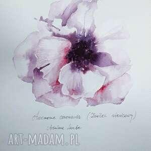 anemon akwarela artystki adriany laube - obraz na papierze a3, zawilec, kwiat