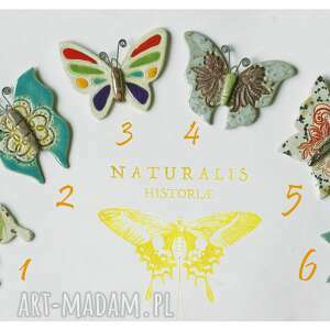 motyle dla kolekcjonera, ceramika, motyl, kolekcjoner