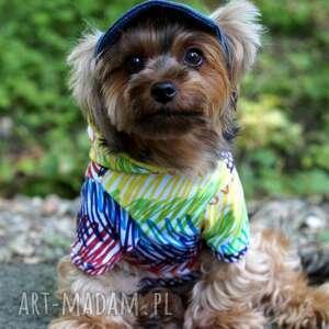 Ubranko dla psa, bluza, ubranie, sweter, kurtka, ubranko, pies
