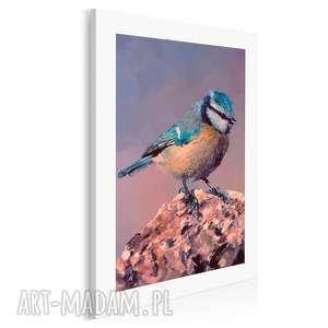 obraz na płótnie - modraszka ptak 50x70 cm 04101, ptak, modraszka, gałąź
