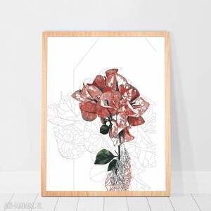 plakat - rysunek kwiatu bugenwilli, rysunek, plakat, grafika, kwiaty, prezent