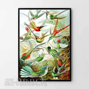 plakat obraz rajskie ptaki 50x70 cm b2, plakat, grafika, salon