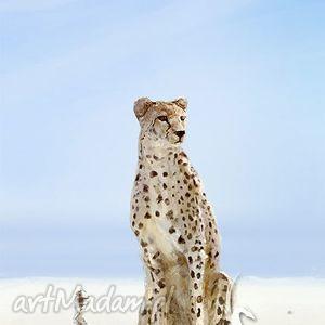 obraz - gepard płótno