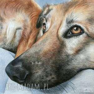 zwierzaki portret przyjaciela, portret, pies, kot, portretowanie, rysunek