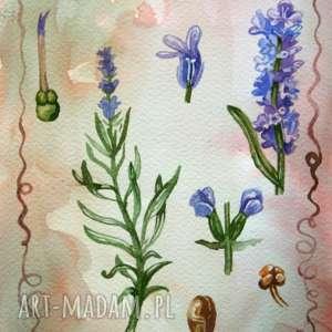 lawenda tablica botaniczna