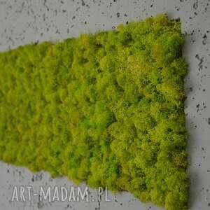 Nowoczesny obraz mech beton 60x60 teslatimestudio mech, betonowy