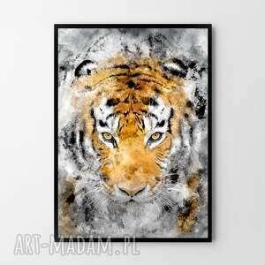 plakat obraz tygrys 50x70 cm b2, grafika, plakat, obraz, tygrys