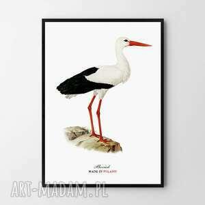 plakat obraz bociek 50x70 cm b2, obraz, ptak, plakat, bocian