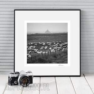 autorska fotografia analogowa, mont sheep michel, francja, zdjęcie