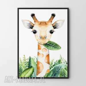 plakat obraz żyrafa 50x70 cm b2, dziecko, pokoik dziecka