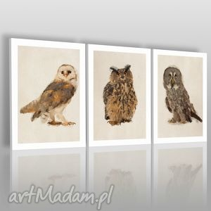 obraz na płótnie - sowy tryptyk - 3x50x70 cm 03301 - tryptyk, sowy, ptaki