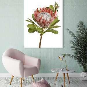 Obraz drukowany na płótnie kwiat protea -duży format 70x100 0342