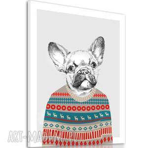 obraz buldog francuski w sweterku 60x80cm, bulog, pies, francuski