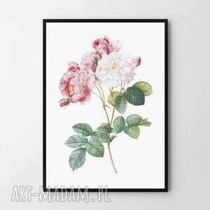plakat obraz róża 50x70 cm b2, róża, plakat, grafika, plakaty