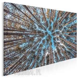 Fotoobraz na płótnie - las drzewa niebo 120x80 cm 904701 vaku