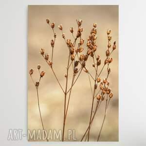 przedwiosnie - foto obraz, kwiaty, suszone natura, minimalizm