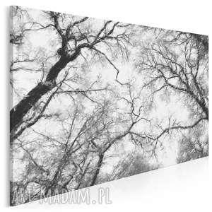 obraz na płótnie - drzewa czarno-białe 120x80 cm (10601)