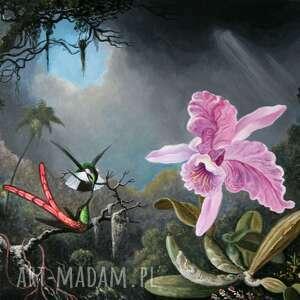 różowa orchidea i rajska para obraz na płótnie, orchidea, obraz, miłość, koliber