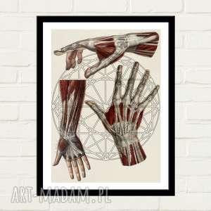 Hexagon Hand Plakat 30x40, plakat