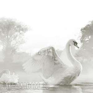 obraz w szarościach na płótnie piękne łabędzie 90 x 70, elegancki minimalizm