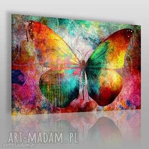 Obraz na płótnie - MOTYL KOLOROWY 120x80 cm (59801), motyl, kolorowy, grunge