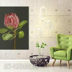 obraz drukowany na płótnie kwiat protea -duży format 70x100 0347