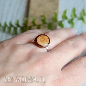 drewno drewniany pierścionek - modrzew