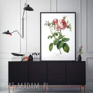 plakaty kwiaty plakat
